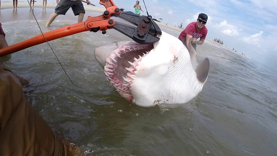 Shark Fishing From The Surf Has Been Good Delaware Surf