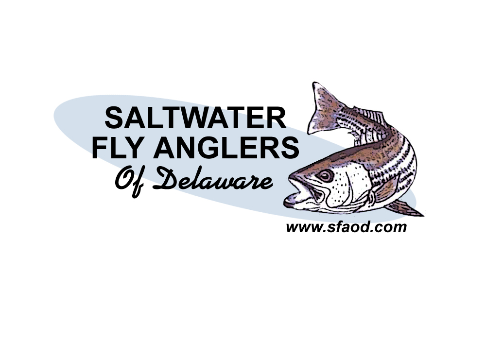 Saltwater Fly Anglers Of Delaware