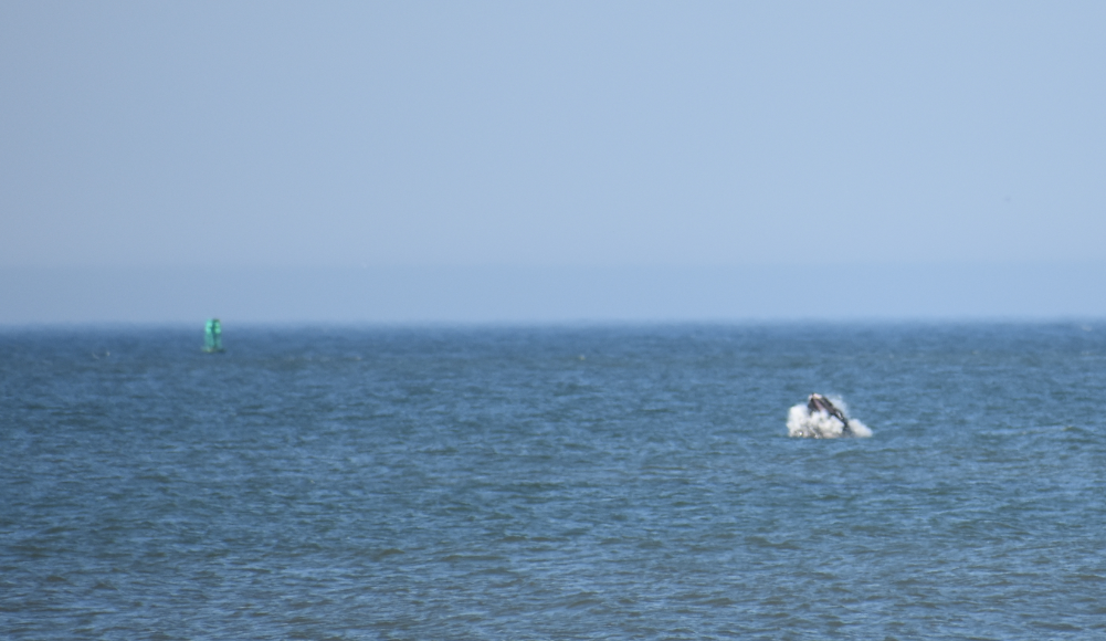 whale watching, delaware, surf fishing, whale breaching, delaware, sussex county